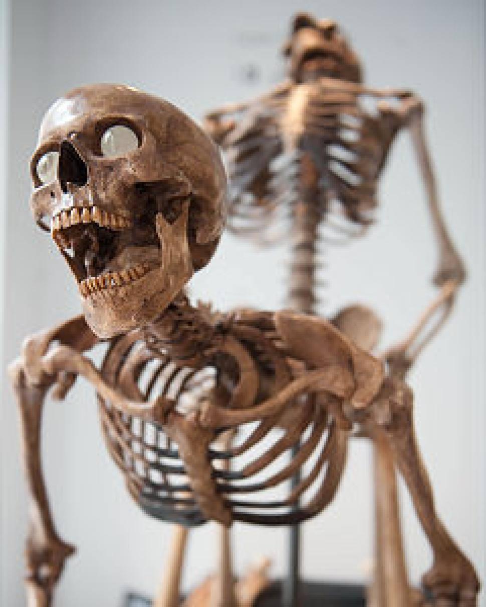 скелеты трахаются
